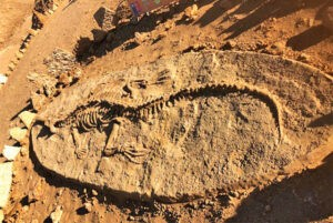 Parque Paleontológico